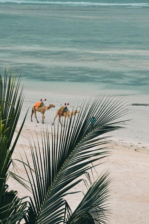 spiaggia Kenya